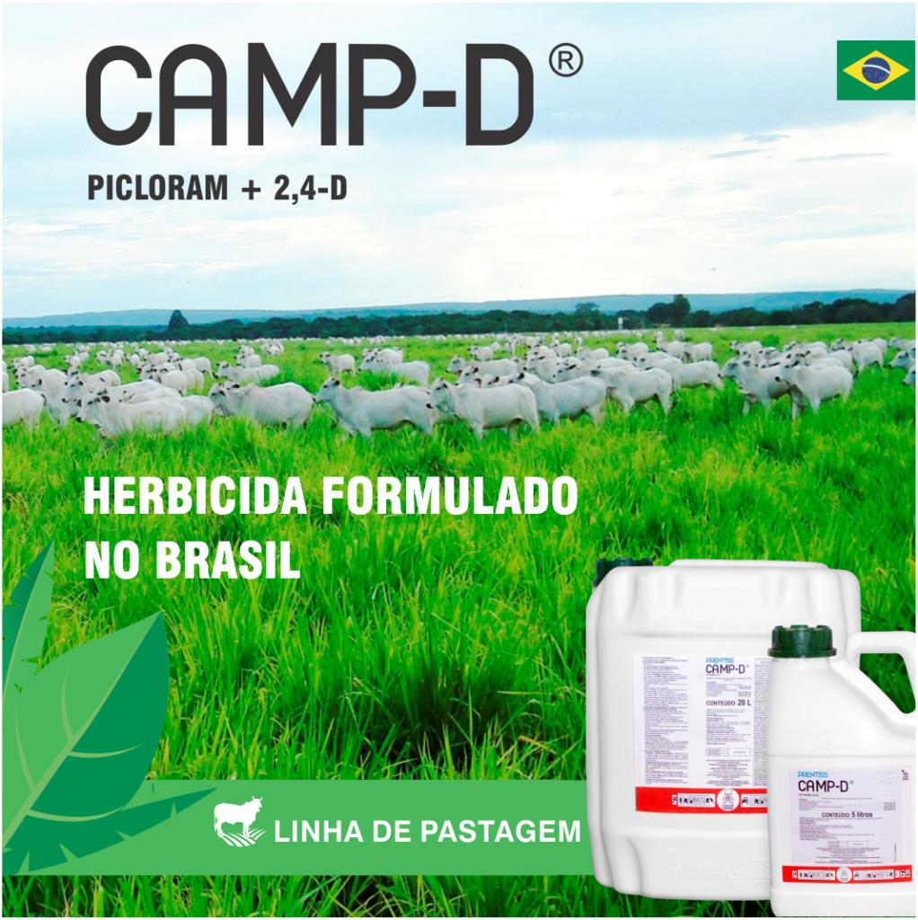 Camp_D_IMAGEM REAL