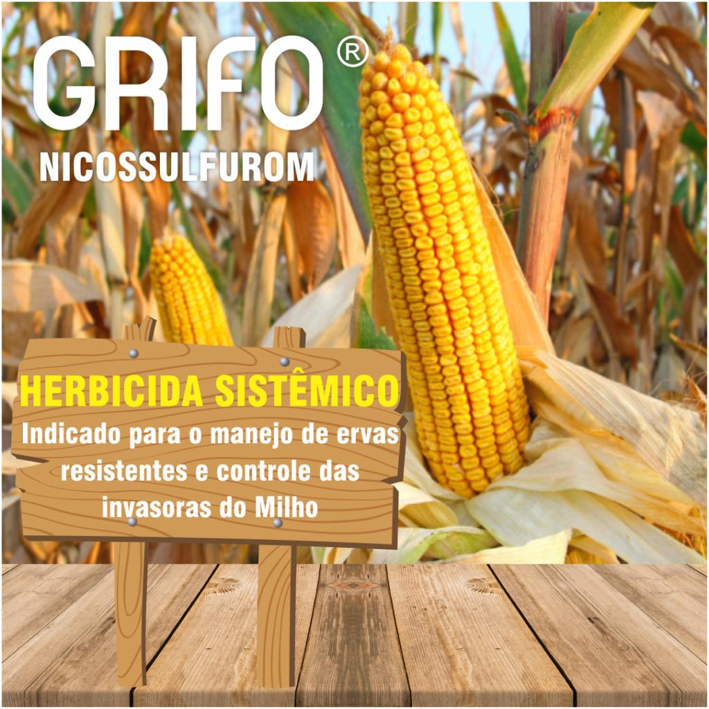 Grifo_0000001