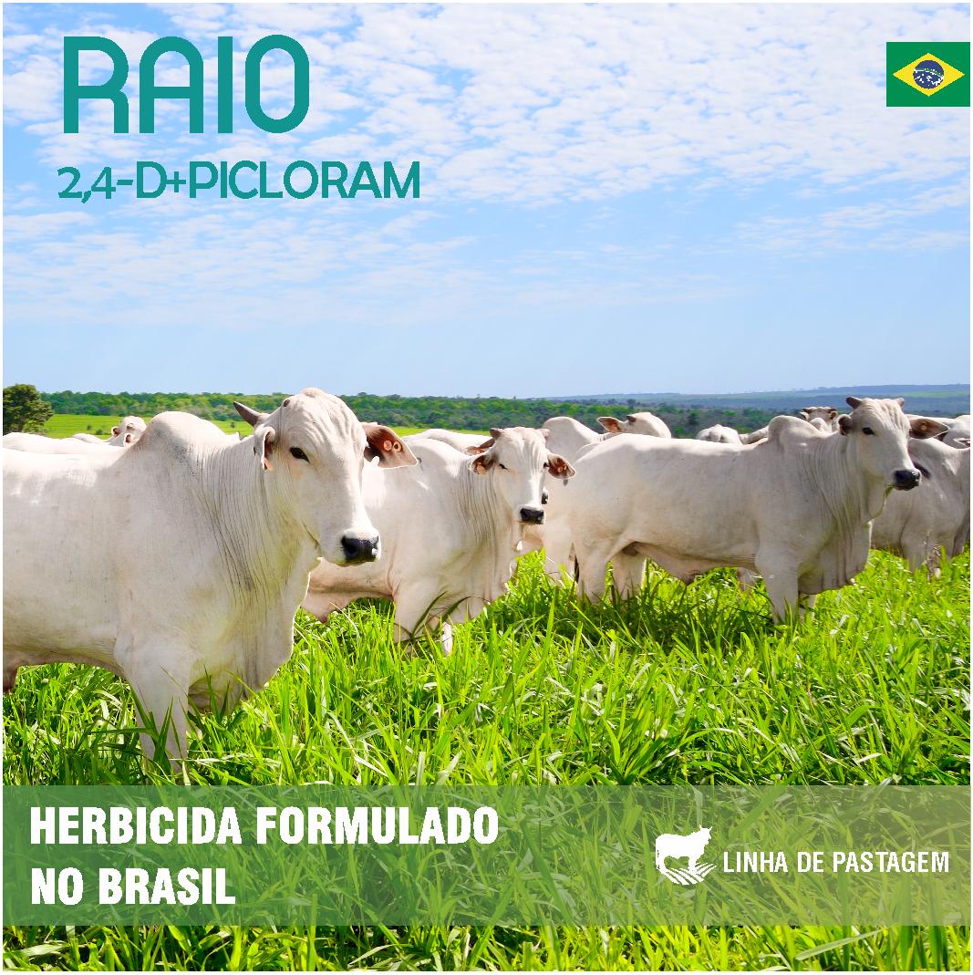 Raio_Site_